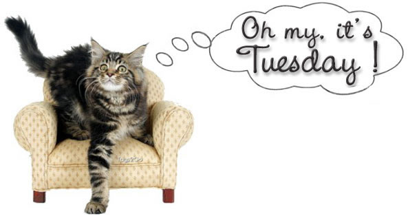 oh-my-its-tuesday1